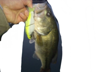 2013songfish.jpg