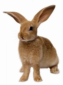 100114 rabbit
