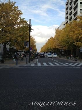 141201横浜銀杏並木