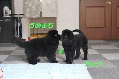 2010_0725aqua2sai-20653a.jpg
