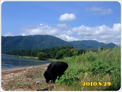 2010_0829asabiwako0031.jpg