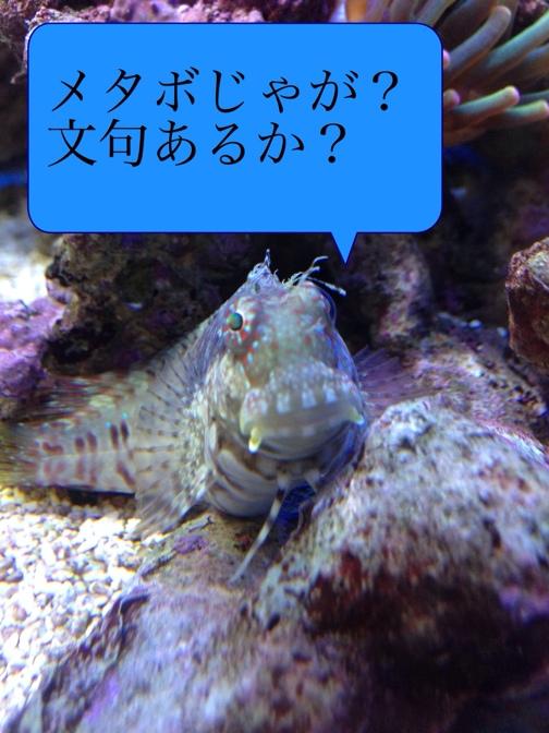 fc2blog_20131209003237ecd.jpg
