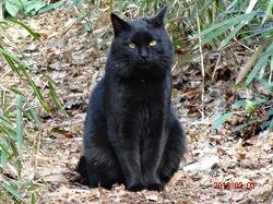 黒猫130203