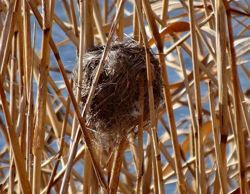 s-何の巣