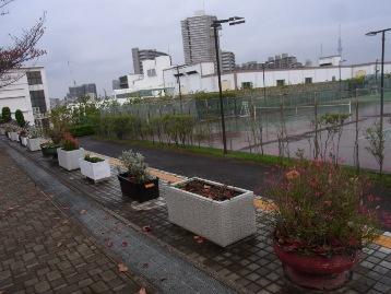 20141106交通園花壇作業後 (1)