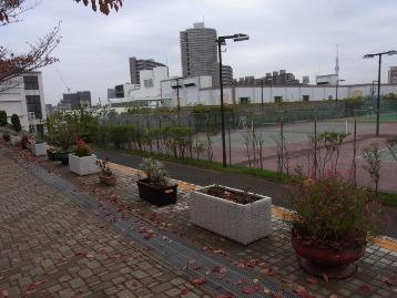 20141106交通園花壇作業前 (3)