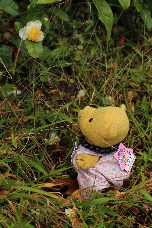 チャノキの花を見上げる111013