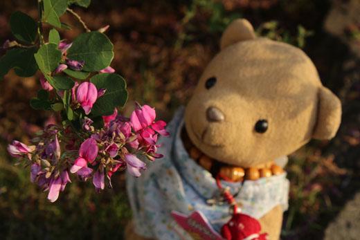 ヤマハギの花をじっと 111018
