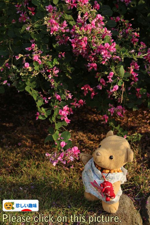 ヤマハギの花を見る 111018バナー