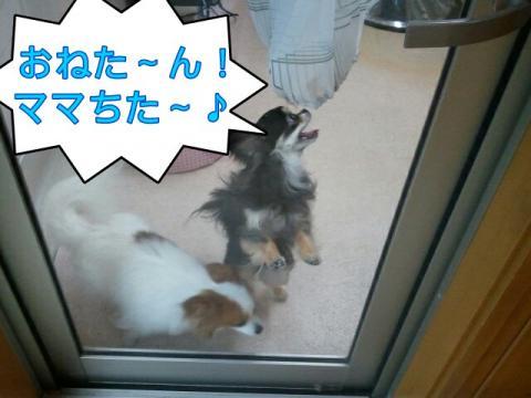 moblog_301be146.jpg
