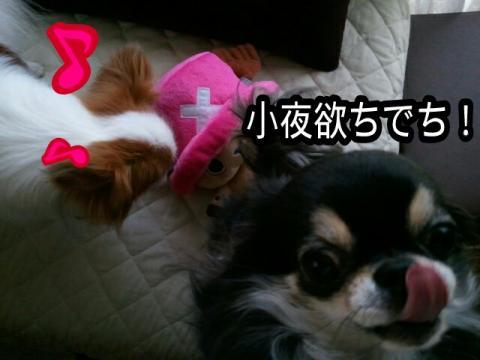 moblog_620a24b6.jpg