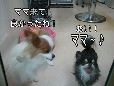 moblog_7e20fc85.jpg