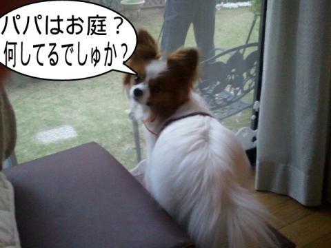 moblog_ccba3750.jpg