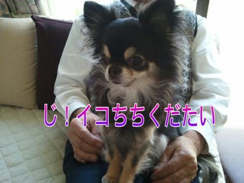 moblog_cda31b63.jpg