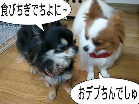 moblog_e9b691c2.jpg