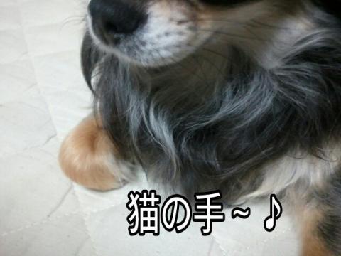 moblog_fde62446.jpg