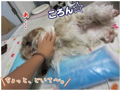 2011-09-11-07.jpg