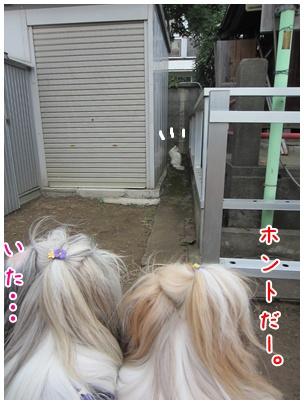 2011-09-12-09.jpg