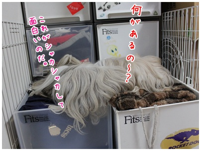 2011-09-18-04.jpg