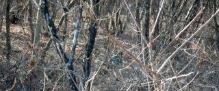 1月の森1