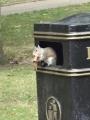 ゴミ箱リス