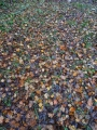 秋の落ち葉の絨毯