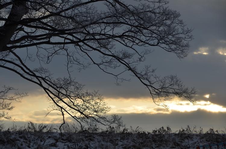 寒い朝-3