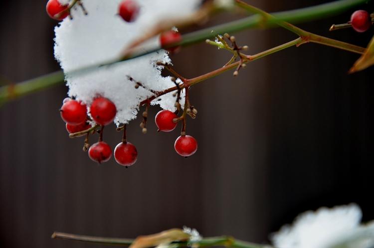 雪慕情-1