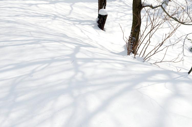 今日の雪景色-1