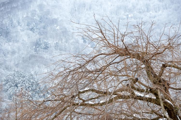 今日の雪景色-3