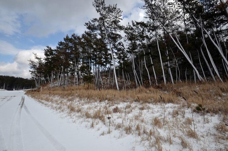 今日の雪景色Ⅱ-2