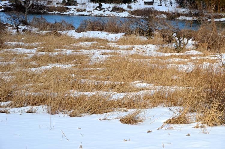 雪 河原-2