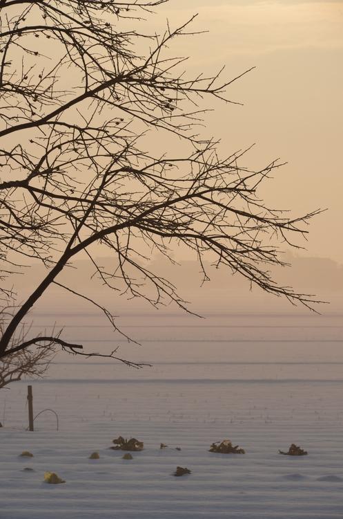 霧の朝-4