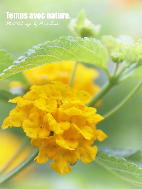 Yellow flower and leaf