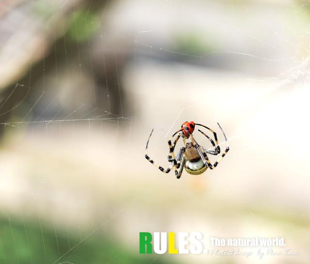 蜘蛛とてんとう虫