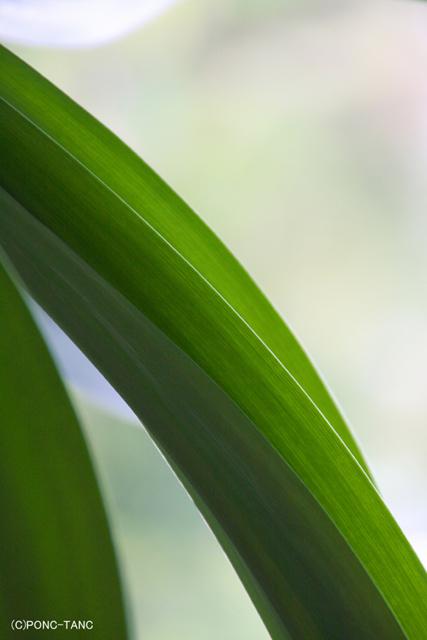 南国のグリーン