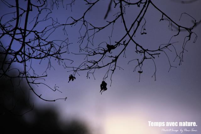 softlight&silhouette