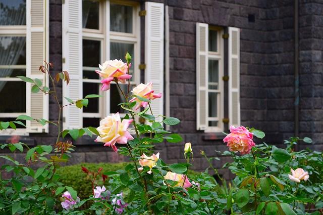 旧古河庭園のバラ 005