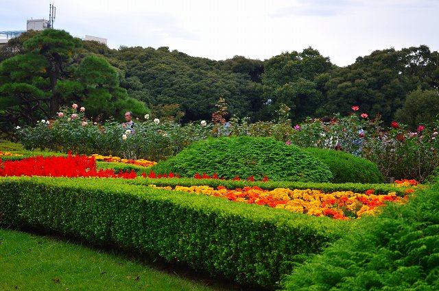 旧古河庭園のバラ 002