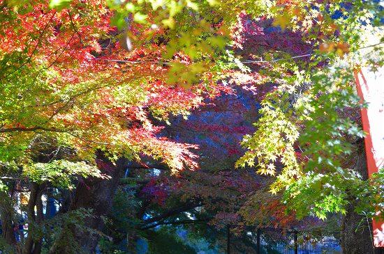 袋田の滝 011