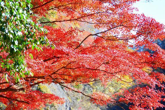 袋田の滝 045