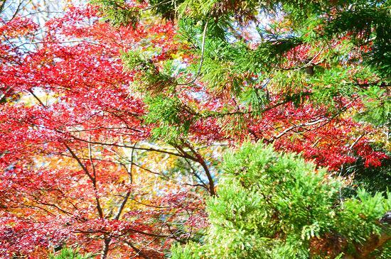 袋田の滝 057