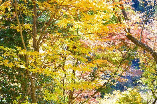 袋田の滝 058
