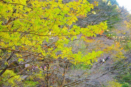 袋田の滝 075