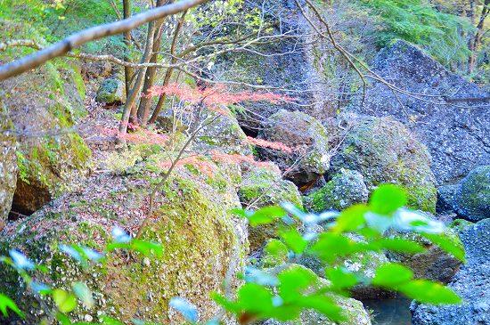 袋田の滝 080