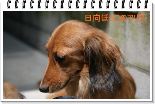 IMG_4029.jpg