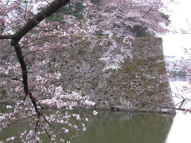 4.24鶴ヶ城の桜-2