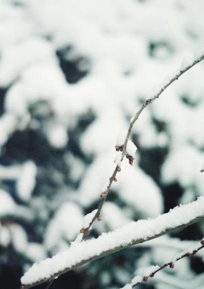 エクレア枝♪