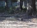 F1001369石神井公園記念庭園