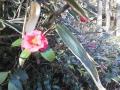 F1001371石神井公園記念庭園